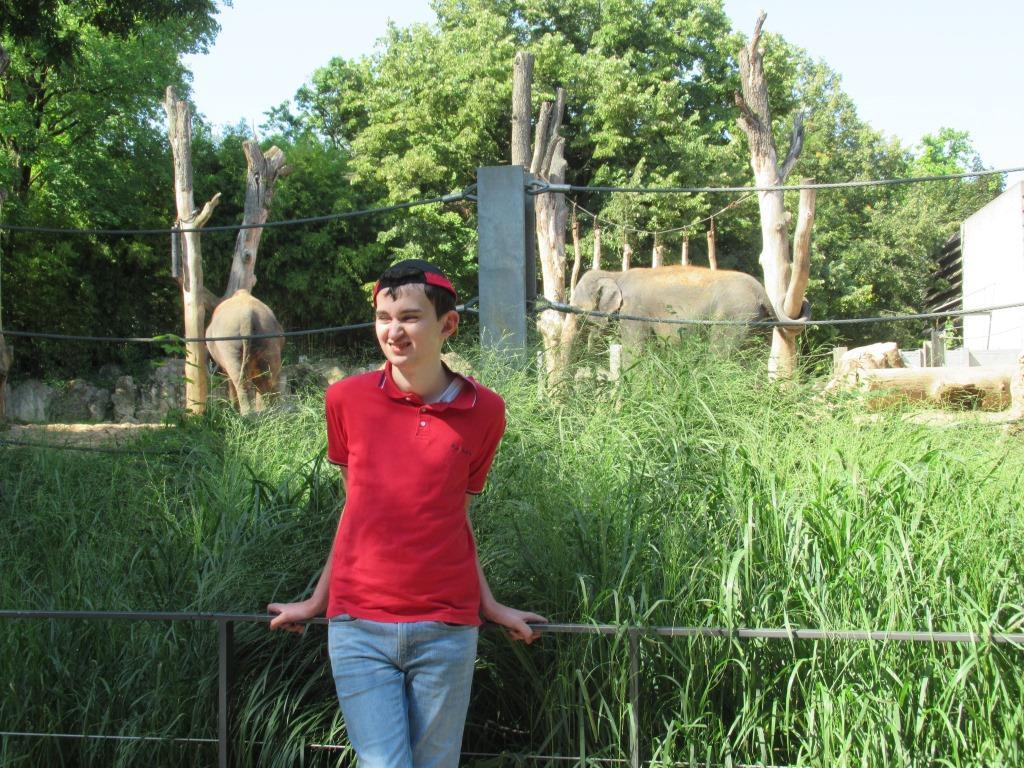 Ein Mann steht vor einem Elefantengehege